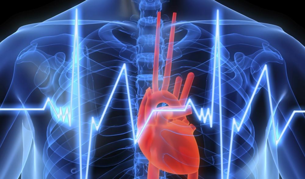 PHAW-Heart-Pic-V3